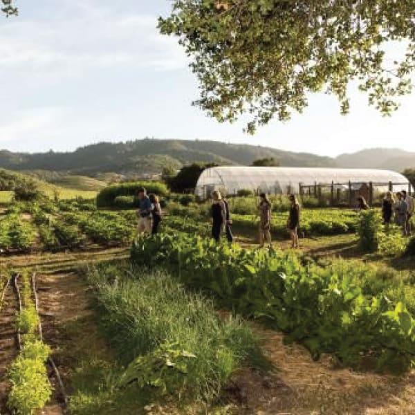 Explore a Culinary Garden