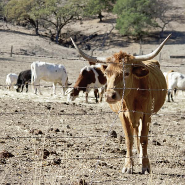 Go Cow Spotting