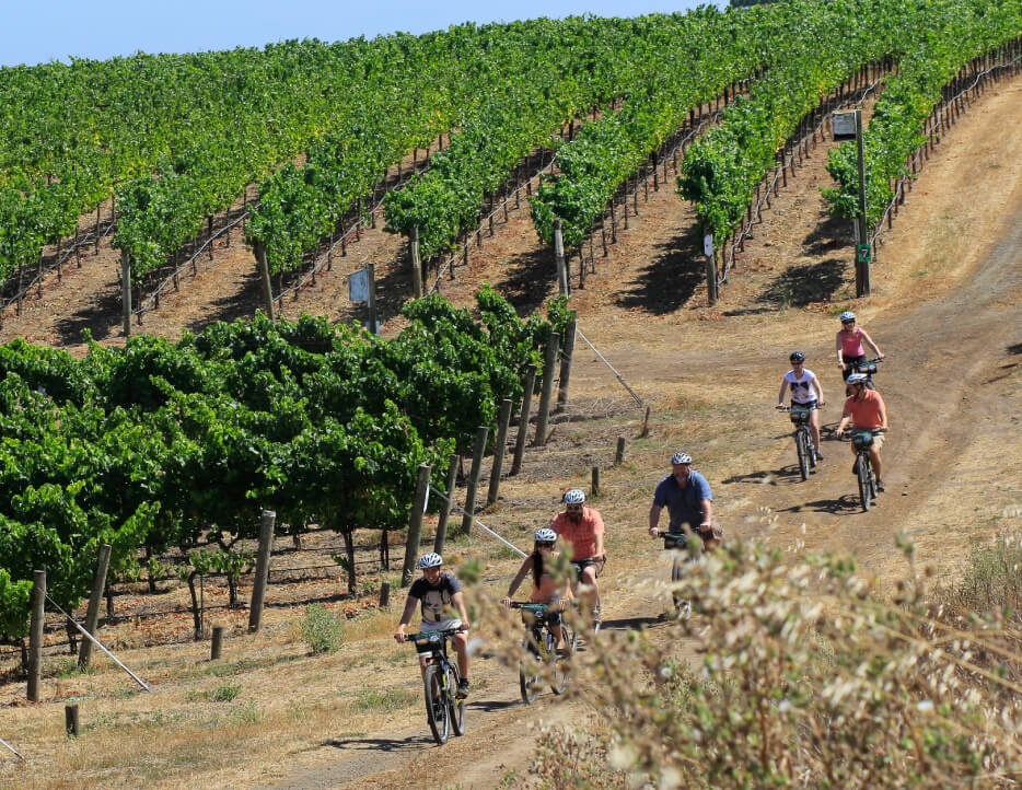 A tour group of seven people rides off-road through the vineyards on mountain bikes at a Napa winery