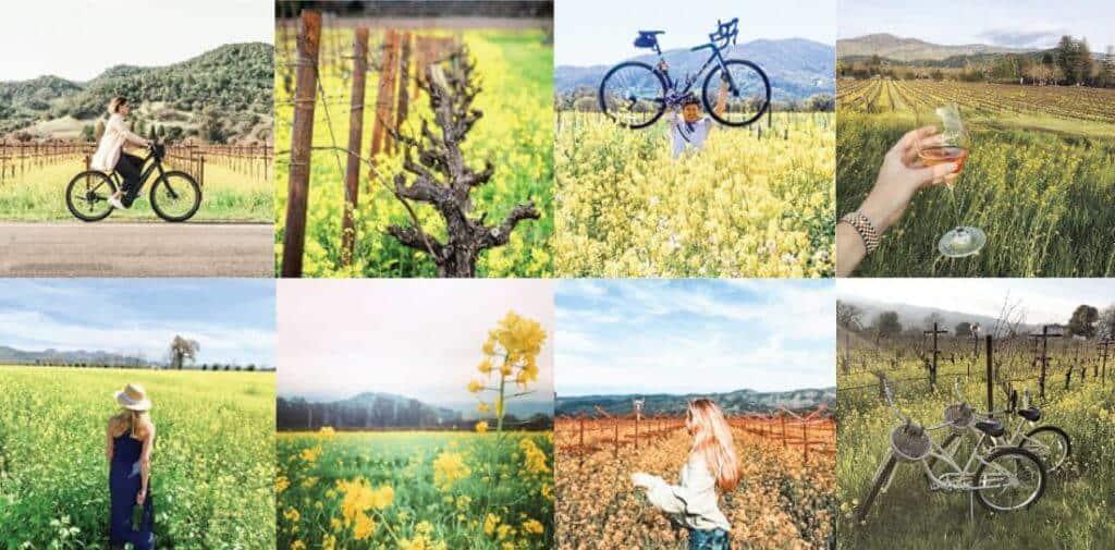 Napa Valley mustard season